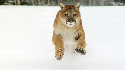 Mammals Video Stock Footage