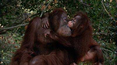 Primates Video Stock Footage