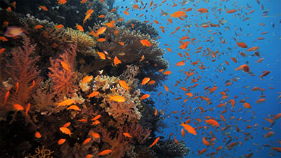 Coral Reefs and Ocean Acidification