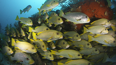 Fish Video Stock Footage