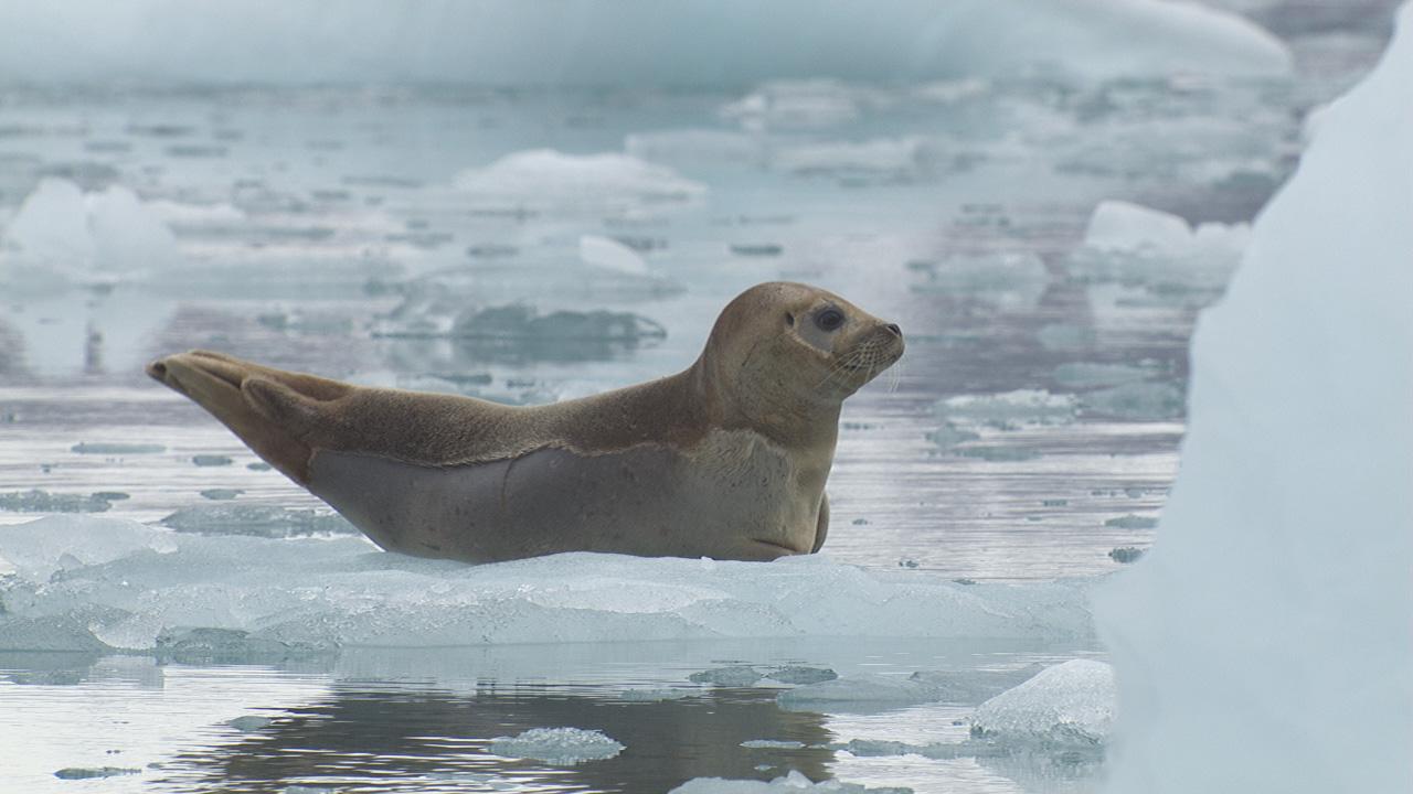 Marine Mammal Video Stock Footage