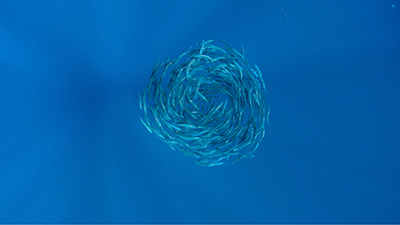 Ocean Concepts Video Stock Footage