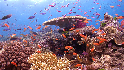 Coral Reefs of Australia Video Stock Footage