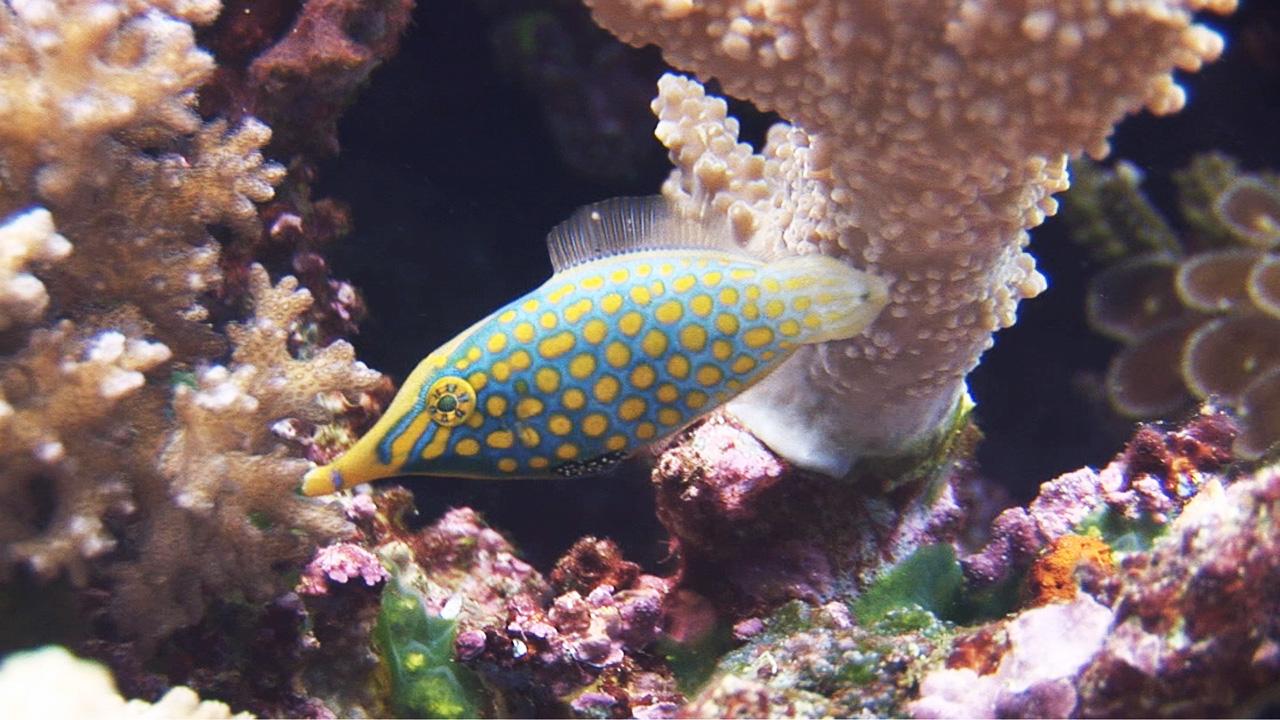 Royalty Free Ocean & Underwater Video Stock Footage