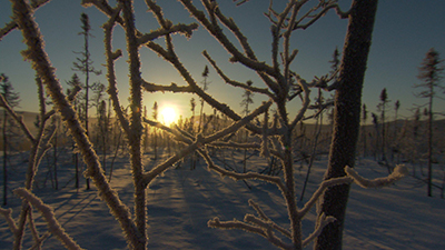 Winter Wonderland Video Stock Footage
