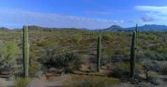 Scenic view of the Organ Pipe Cactus National Monument
