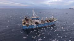 Fishing trawler with lots of birds and Orcas around in North atlantic, Norway, 4K aerial