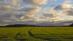 Farmland with Rye, Secale cereal during sunrise in Time lapse