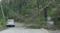 Damage To Power Lines And Trees In Aftermath Of Hurricane