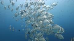 Underwater Video Décor Reel