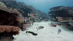 underwater pov through coral reef tunnel with variety of fish