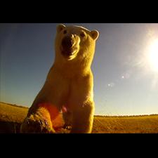 Adam Ravetch: Arctic Bear Productions Video Profile