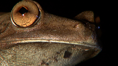 Amphibians Video Stock Footage