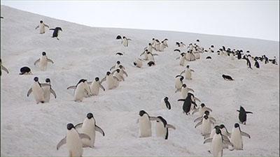 Antarctica: An Extreme Environment