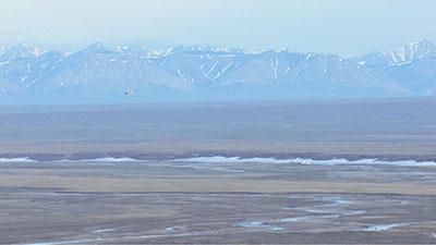 Arctic Cineflex Video Stock Footage