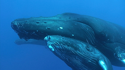 Whale Video Stock Footage