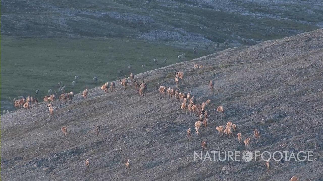 Aerial Alaska Footage 4K to 6K