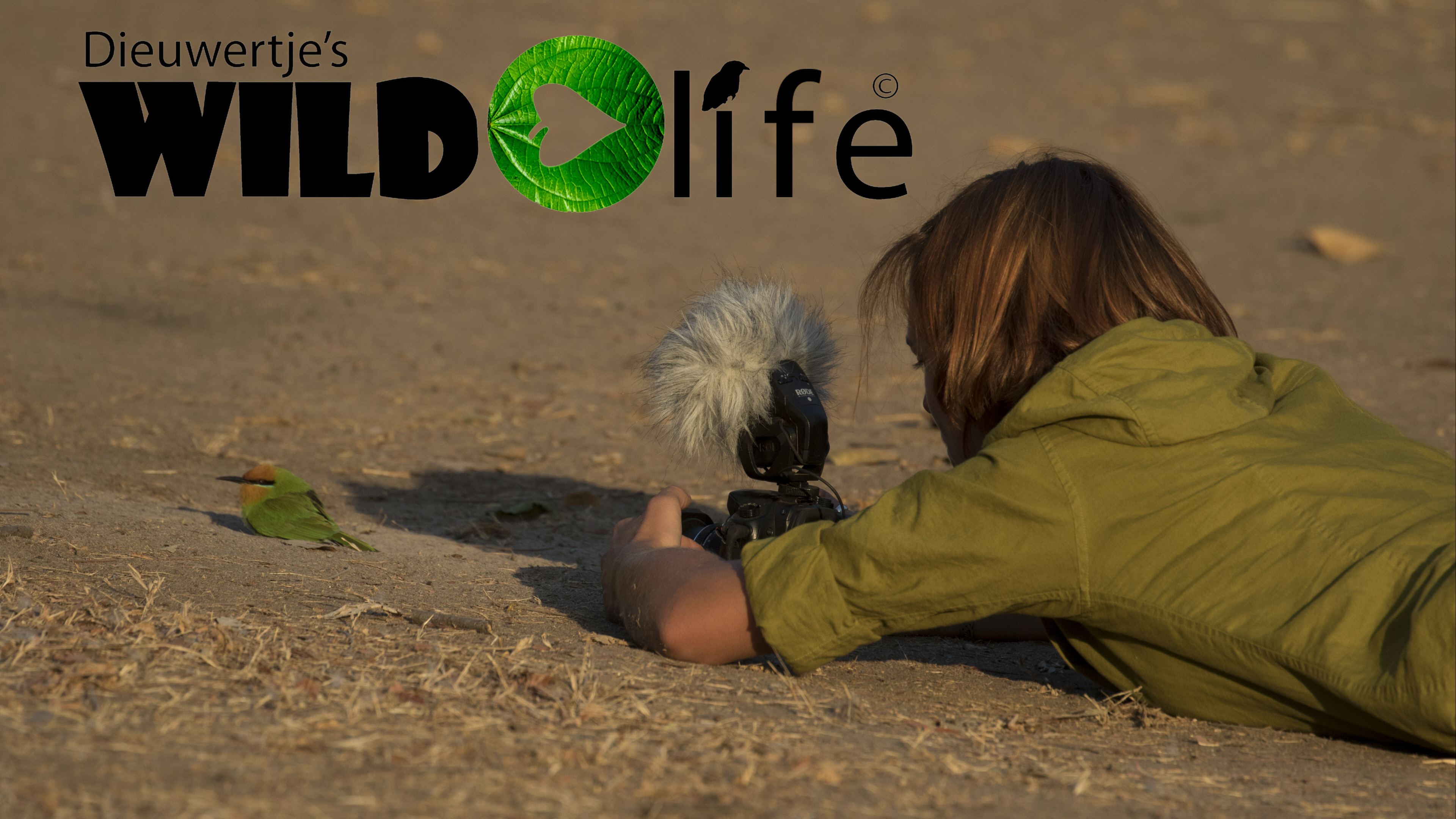 Dieuws Wildlife Stock Footage Collection