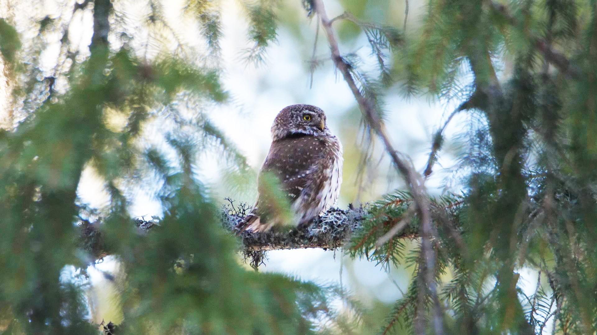 Arthur Gal - Wildlife documentaries Stock Footage Collection