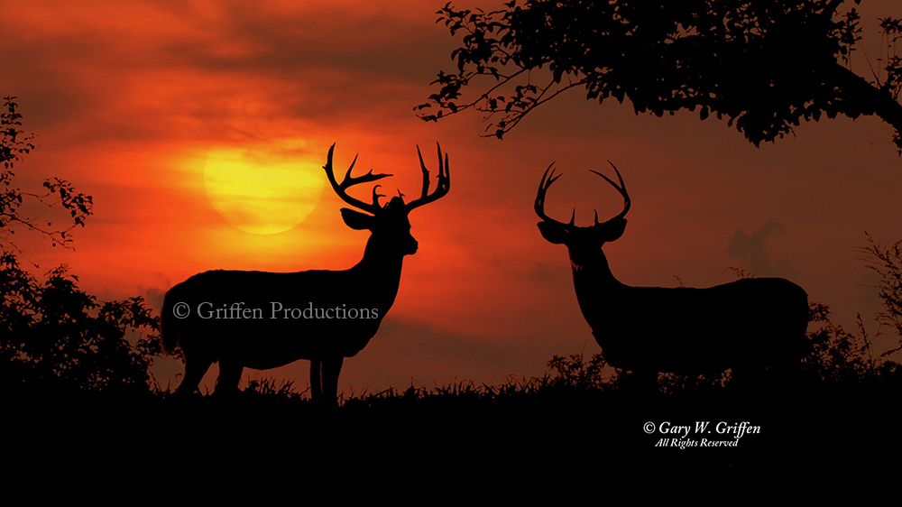 Griffen Productions Stock Footage Collection