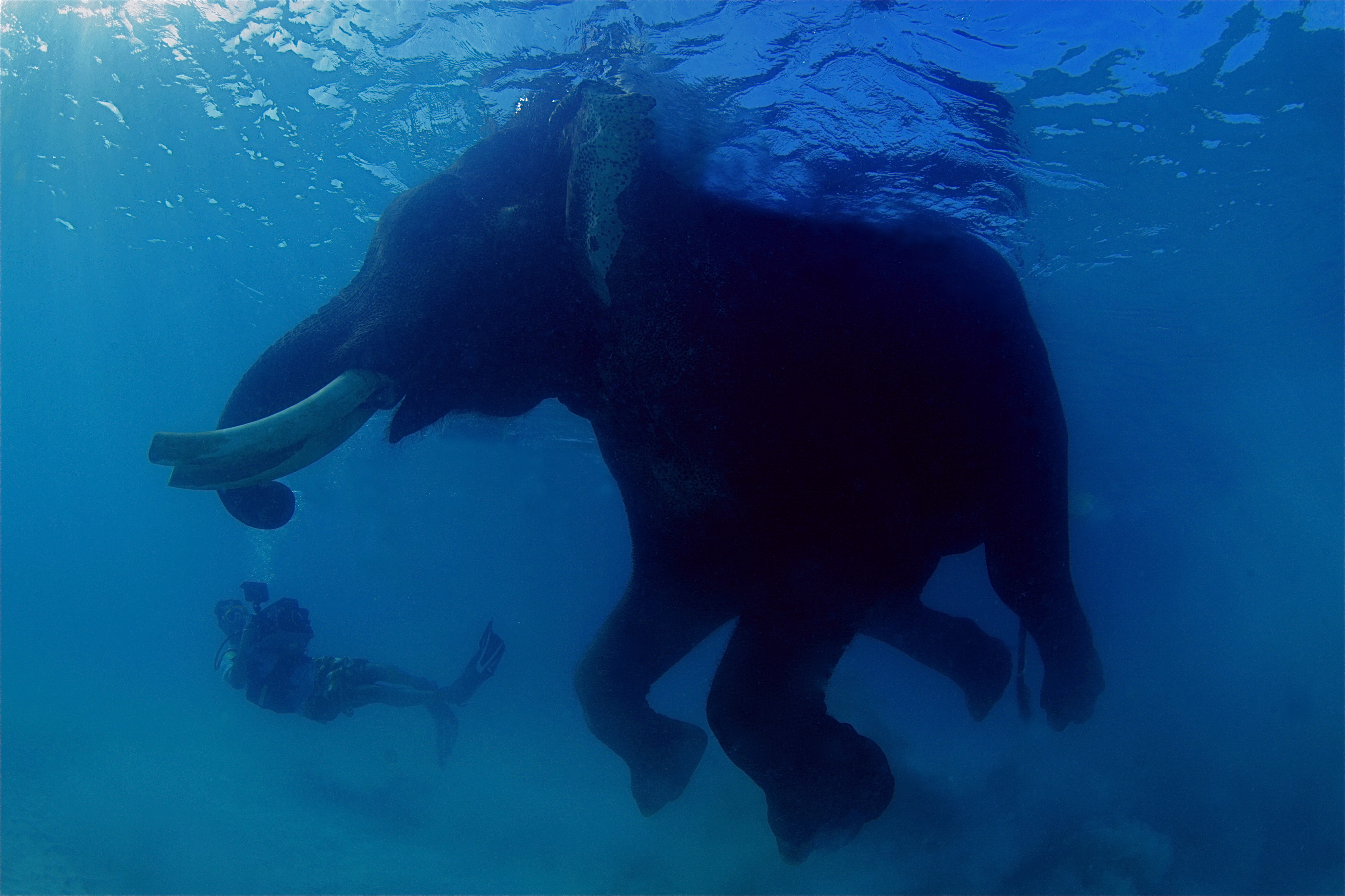 kanaloa nature & Films, Oceans for all Foundation Stock Footage Collection