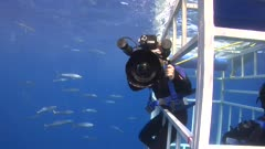 Diver Filming Great White Shark