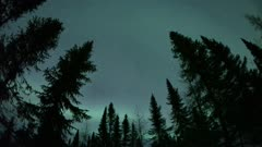 Northern Lights Silhouette Conifer Trees