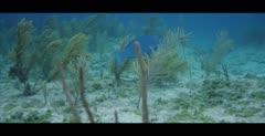 Sharks, possibly Nurse Sharks, in the Bahamas