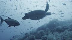 Galapagos Islands coral reef