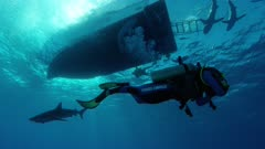 Scuba Diving in the Bahamas