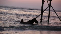 Horses bathing at the beach at sunset