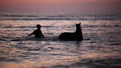 Horses bathing in the sea at sunset
