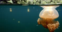 camera approaches jellyfish near surfaceof lagoon, camera becomes half submerged