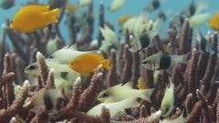 Various fish swimming on coral reef