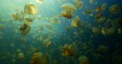 Low angle of jelly fish in lagoon