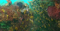 coral reef with large variety of reef fish swimming around