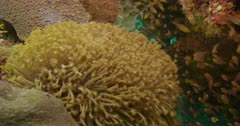 Coral reef with variety of reef fish swimming around