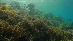 camera travels along reef with various reef fish