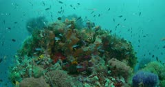Large group of various fish swimming above reef