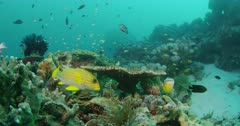 long take of various fish swimming over coral reef
