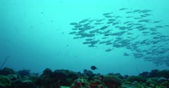 Reef and reef fish, low angle view of school of fish