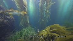 SFR589131 - Underwater Algae Bloom