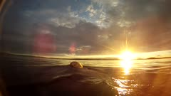 Lone Male Bear Swimming, Diving, Surface, & Swims through Sun At Horizon