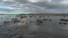 Aerial Lone Polar Bear Exits Water Onto Rock Island