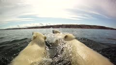 Mother & Twin Cubs Swimming Open Ocean & To Rock Island