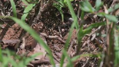 Flying ant leaves hole