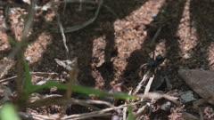 Scorpion scares off spider