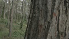 Tracking shot inside a green forest