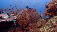 glassfish coral PR