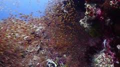 glassfish PR